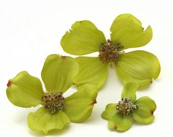 3 Light Green Dogwood Blossoms - Artificial Flowers, Silk Flowers