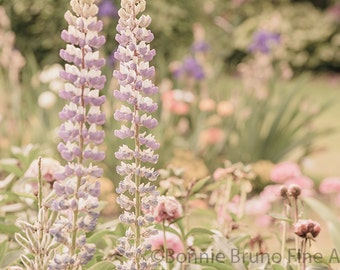 Dreamy Lupine fine art print - garden photography, spring home decor, floral wall art, soft dreamy light, pastel nature prints, ethereal