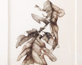 Original Botanical Watercolor on paper of a decaying oak leaf