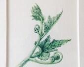 Original Botanical Watercolor on Paper of squash tendrils