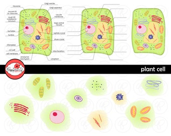 Plant Cell Science Diagram Clipart Set (300 dpi) School Teacher Clip Art Science Physical Science Diagram