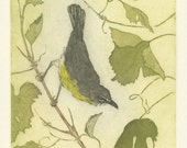 Fine Art Etching, Yellow-Breasted Chat