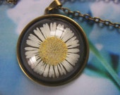 Real Flower Pendant Daisy