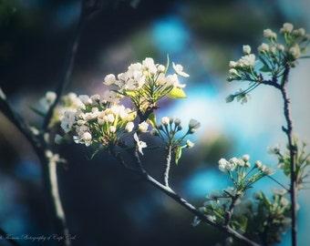 FLOWER Photography - Pear Tree FLOWER Art, Nature Photo, Scenic Print, Romantic Art, Spring, Summer Photography