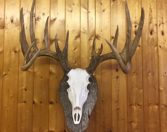 Deer-Skull-European-Mount-REPLICA-High-Quality-Taxidermy  ,Faux ,Log Cabin Decor,Art