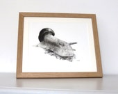 Snail charcoal drawing, original artwork, pencil drawing, wildife art, black and white, snail art, snail picture, wall art, original art