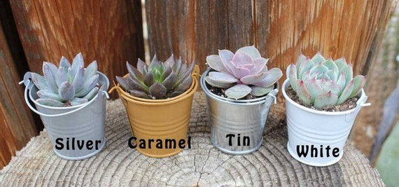 """35 DIY Lovely Wedding Collection Succulents in 2"""" containers with 35 Adorable Pail-Your Choice of Color- Party FAVOR Kit succulent gifts*"""