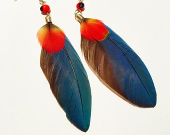 Beautiful Blue Parrot Feather Earrings with Huayruro Seed
