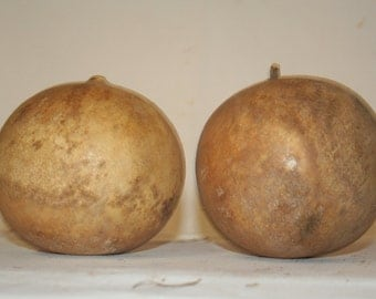 Two Cannonball Gourds, Uncleaned