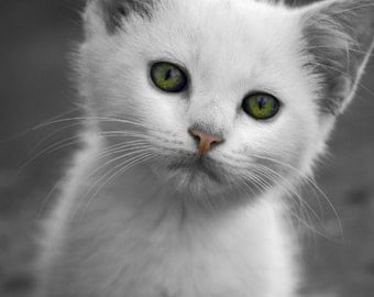 Cat, White, Emerald, Kitten, Black and White, Nursery Decor, Cat Print, Cat Photography