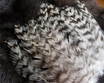 Natural Striped Grizzly Rooster Hackle Feathers - Hand Selected - Lot of 100