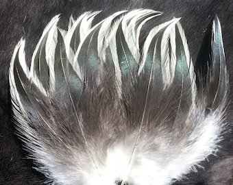 Natural Silver and Bronze Badger Rooster Hackle Feathers - Hand Selected - Lot of 50