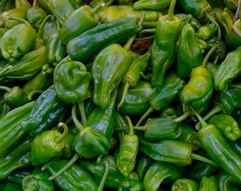 Padron Pepper Spanish Heirloom Very Popular Mild Flavor or Spicy You Choose Rare Seeds