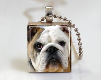 Bull Dog Cute - Scrabble Tile Pendant - Free Ball Chain Necklace or Key Ring