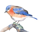 Bluebird print, bluebird watercolor painting, bluebird painting, BB6416, A4 size medium print,