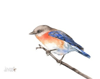 Bluebird print, bluebird watercolour painting, Bluebird painting, bluebird print of watercolour painting, A3 size BB14616