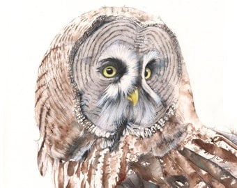 Great Grey Owl print of watercolour painting GO3715  A3 size largest print wall art print - bird art print