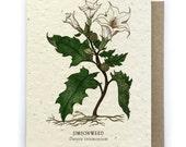 Jimson Weed Card - Plantable Seed Paper - Blank Inside