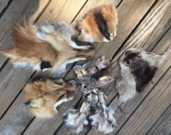 Various Craft Tanned Faces, Fox, Bobcat, Muskrat, Otter