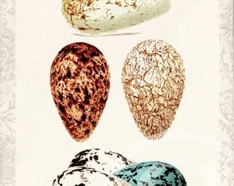 ON SALE Antique Bird Egg - Art Collage Print - Home Decor - Bird Eggs A - 1