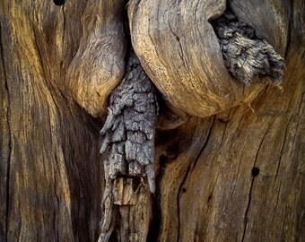 Nature Photography, Natural Wood Sculpture, Bark Wood, Oregon, High Desert, Forest Images
