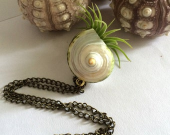 Air Plant Necklace with Iona in shell