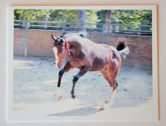 Wild Streak, bucking, note card, beautiful, blank greeting card, bay filly, equestrian photos, fine art, single card, photo greeting card,