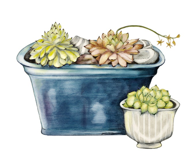 LIMITED EDITION of a Still Life with Blue Ceramics, Irish Killiney Beach Stones, Art Print, Zen-like Still Life, Ireland, Home Garden, Cacti