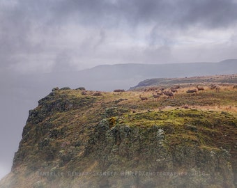Landscape Photography | Herd of Deer | Columbia River Gorge | Nature Photo | Country Photo | Oregon | Rural Oregon Photo