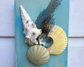 Seashell Wall Art/Beach House Decor/Coastal Lifestyle Wall Decor/Seashell Mix Art