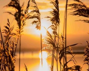 Good morning sunshine, Sunset Photography, Digital download, Landscape Photo, Nature Photography, Holland, Dutch, Stockphoto, Background