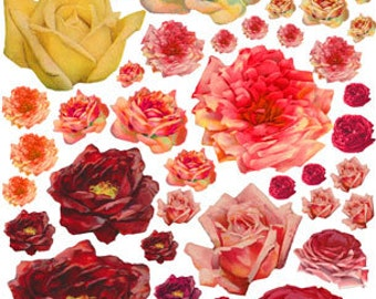 40+ VINTAGE BLOOMING ROSES - Red, Pink, Yellow, Blush - Instant Printable Digital Collage Sheet