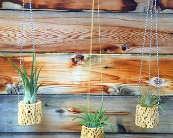 Cholla Wood Hanging Air Plant Trio - A Unique Holiday or Birthday Gift