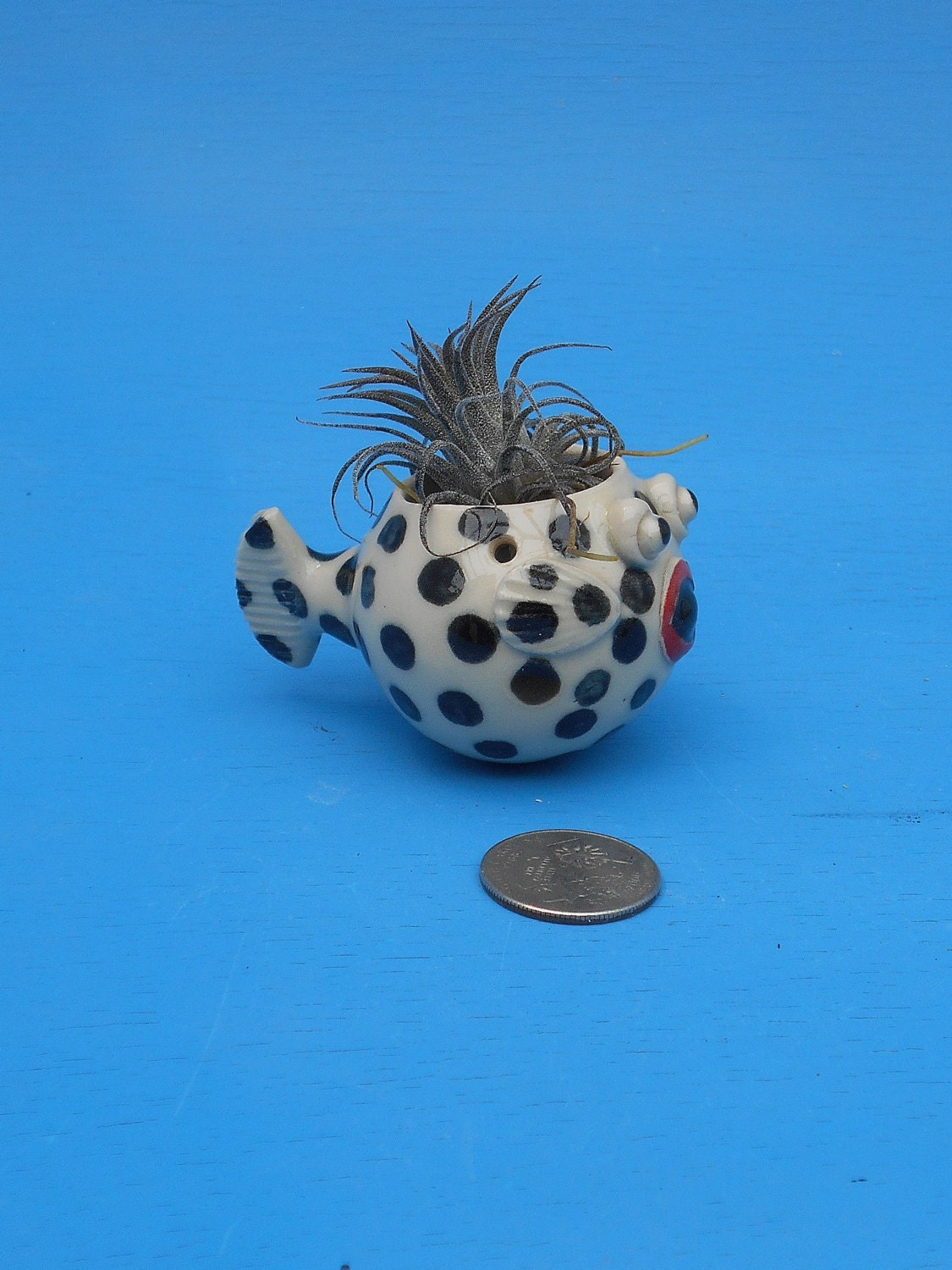 Mini hanging puffer fish planters air plants by cindysearles for Mini puffer fish