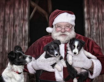 Santa, Border Collie, Puppies, Christmas, Holiday, Photography, Fine Art, Illustration, Barb Lassa