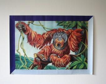 SUMMER SALE 30% OFF!!  Original Berlin Zoo Advertising Poster- Orangutan 1987 - P117