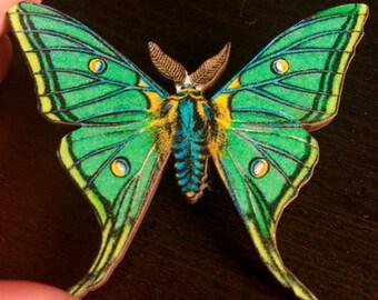 Exotic Moths