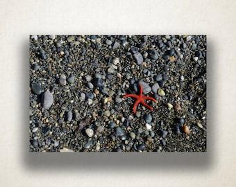 Starfish on Pebble Beach Canvas Art, Starfish Wall Art, Sea Animal Canvas Print, Wall Art Canvas, Photograph, Canvas Print, Home Art