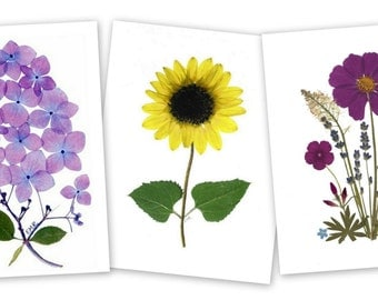 Pressed flower cards, set of 6 notecards, Hydrangea, Sunflower, Cosmos #003