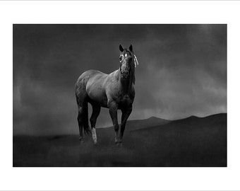 Black and white fine art print of Sioux War Pony standing on the prairie
