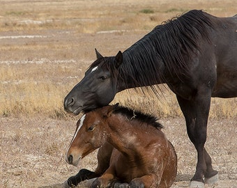 A Mother's Love ~ Wild Mustangs ~ Wild Horses ~ Horse Photography