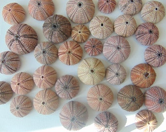 30pcs red-black sea urchins, Summer collection.