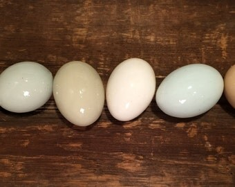One HALF Dozen GLAZED Easter Egger, Clean and Blown for Crafts, Pysanky, Home Decor