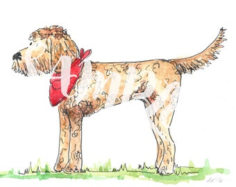 Indy the Goldendoodle Watercolour and Pen