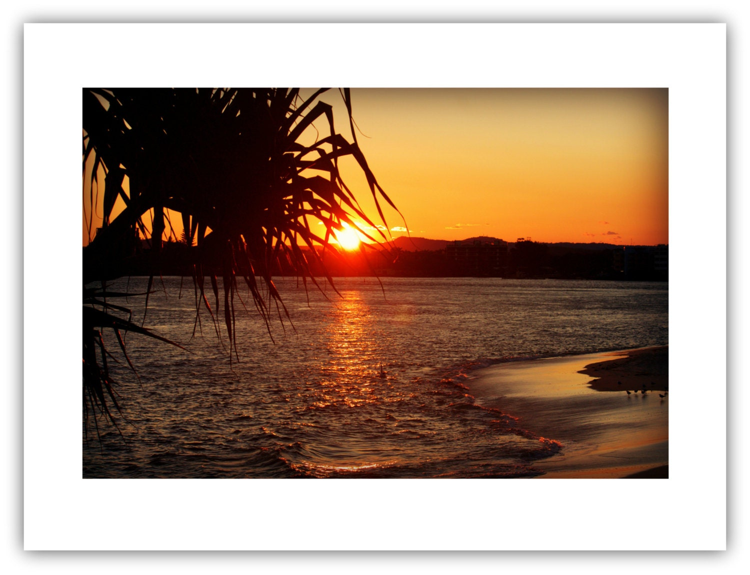 Pandanus sunset caloundra australia home decor wall Home decor wall decor australia