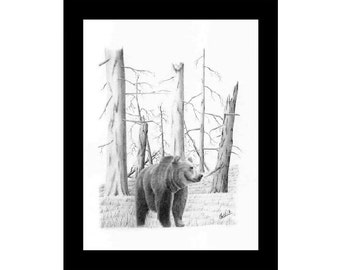 Pencil drawing of a Grizzly Bear with trees