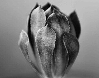 Succulent Art Print - Black and White, Flower, Cactus, Texture, Botanical, Plant Decor, Fine Art Photography