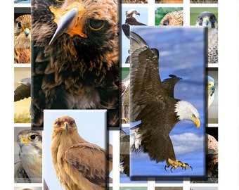 Birds of Prey Hawk Eagle Falcon Digital Images Collage Sheet 1x2 inch Rectangles Domino Commercial INSTANT Download RD60