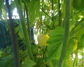 snowberry cherry tomato 20 seeds *HEIRLOOM* Seeds of life
