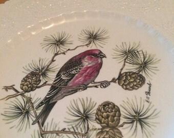 Lovely Vintage Pine Grosbeak Plate by Royal Caulden